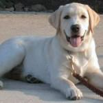 Best Pet Dog Training