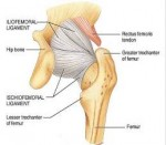 Hip Socket Pain